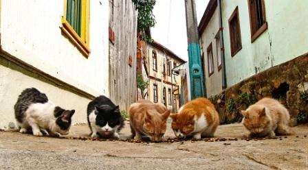 gatospeque